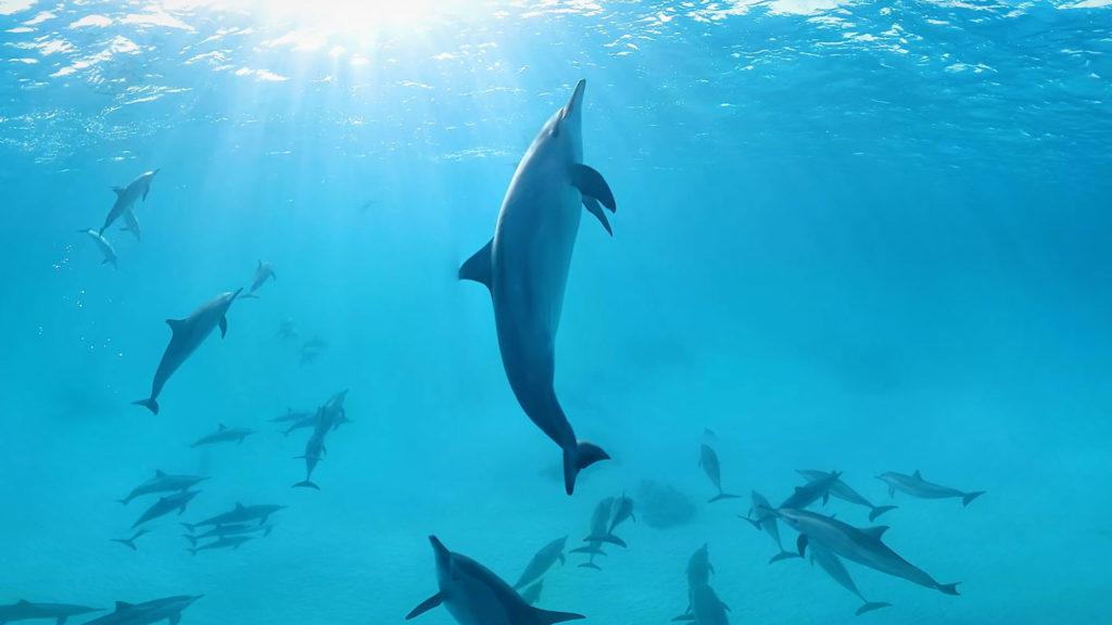 Dolphins-Dance-Magic-Horizons-Wir-Sind-Altenpflege
