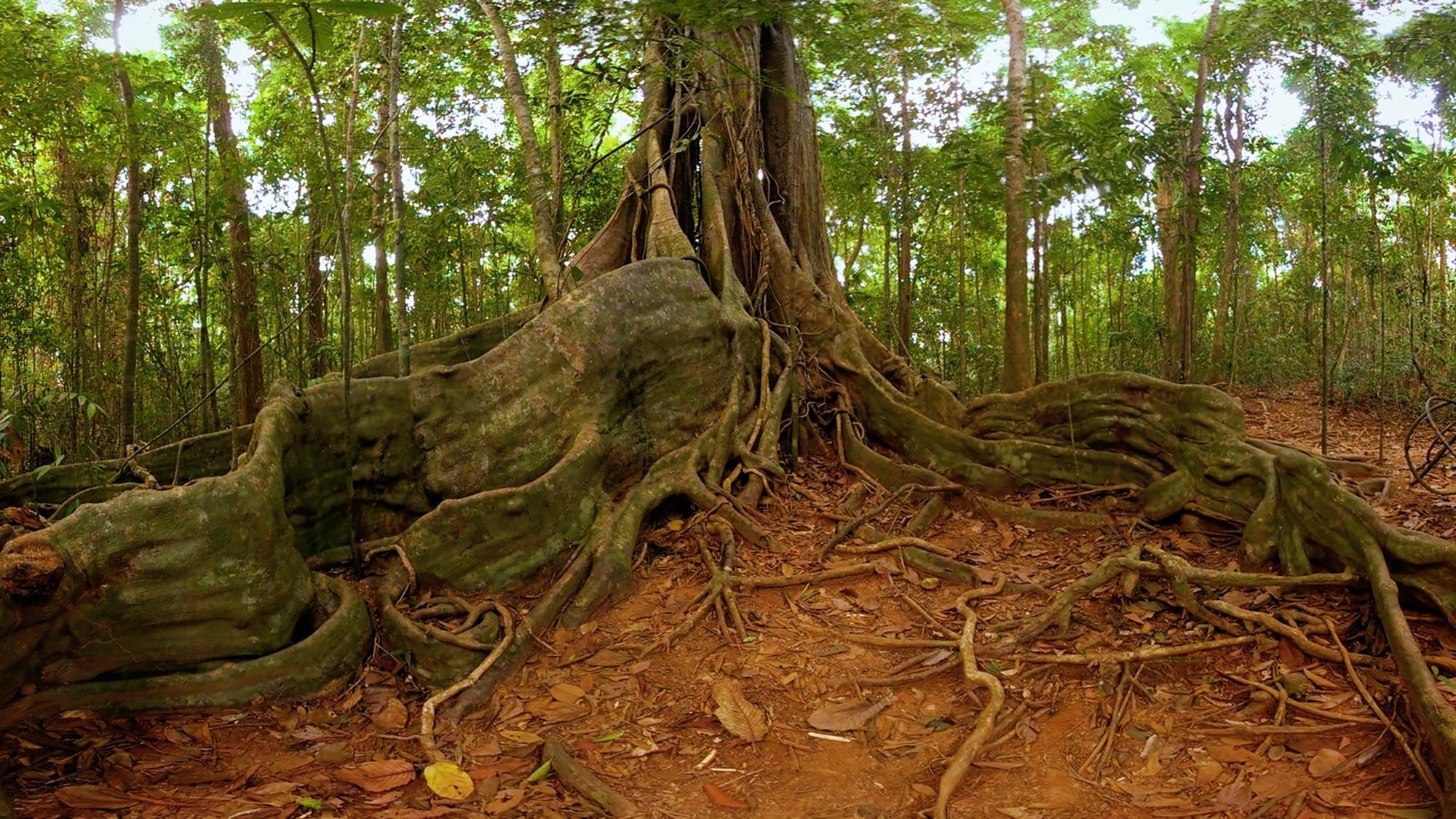 Wir Sind Altenpflege Magic Horizons Virtuelle Reisen Deep-Jungle